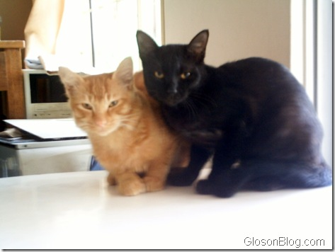 Orange and Blackie